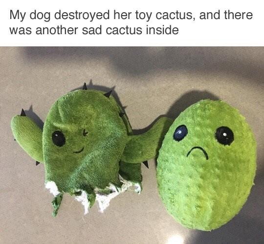 Sad Cactus. . Sad Cactus