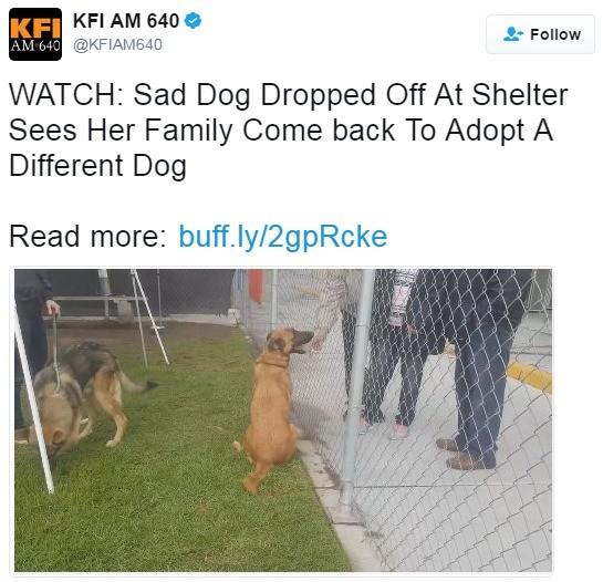 Sad Woof. .. YOU GET DOG YOU KEEP DOG YOU DONT GET TO SWAP THEM LIKE POKEMON REEEEEEEEEEEEE Dog sad adopt pupper