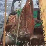 catch n release