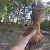 Rescuing a Screech Owl
