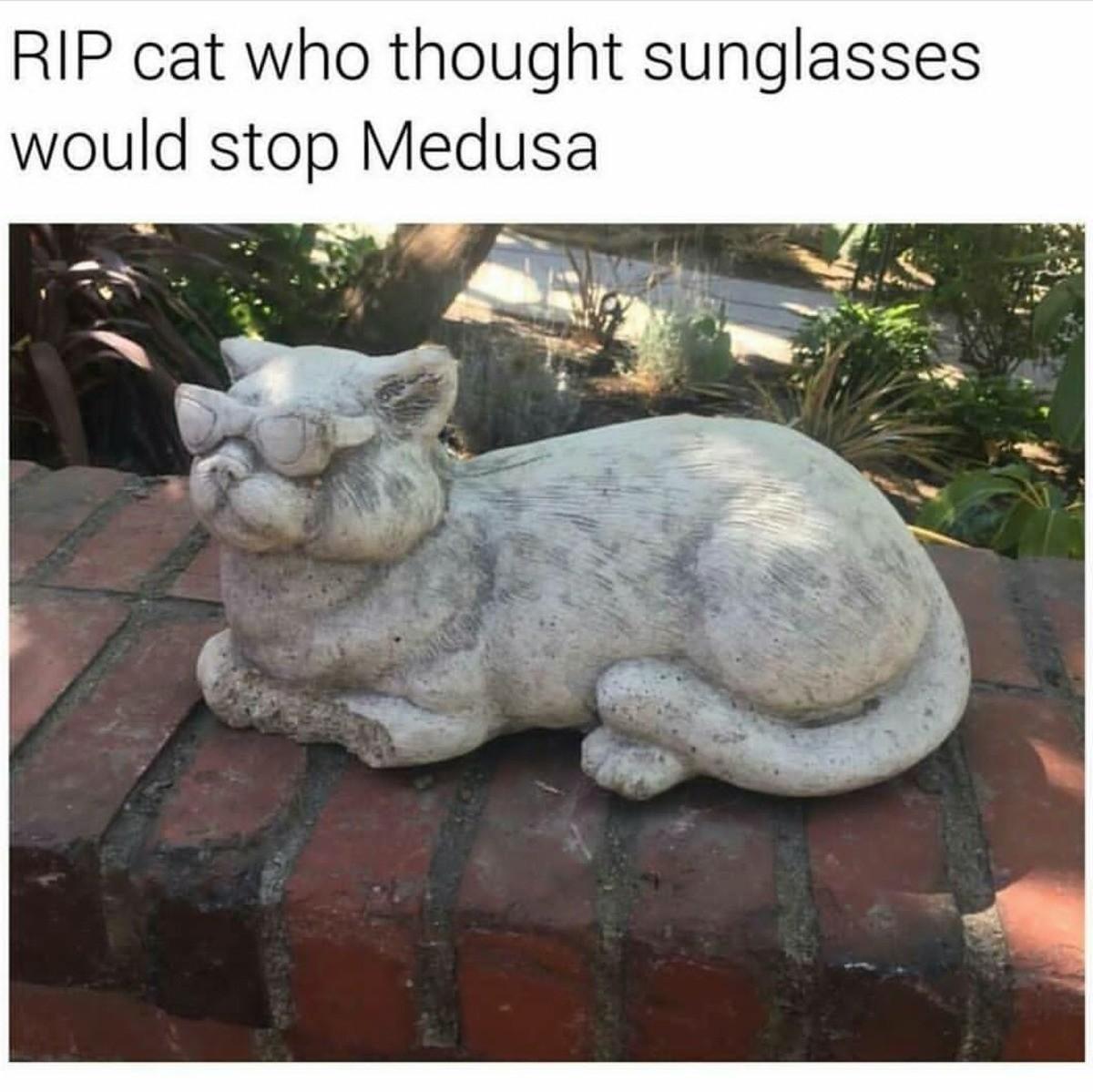 Cat. ЈЕл ДРМА а ? ПА ТО ЈЕ ДОМАЋА МАЈКУ ЛИ ТИ ЈЕБЕМ ДА ТИ ЈЕБЕМ.. Go away, Medusa. I'm drinking water. cat