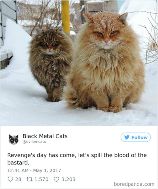 Cat Pics With Metal Lyrics. . Cat Pics With Metal Lyrics