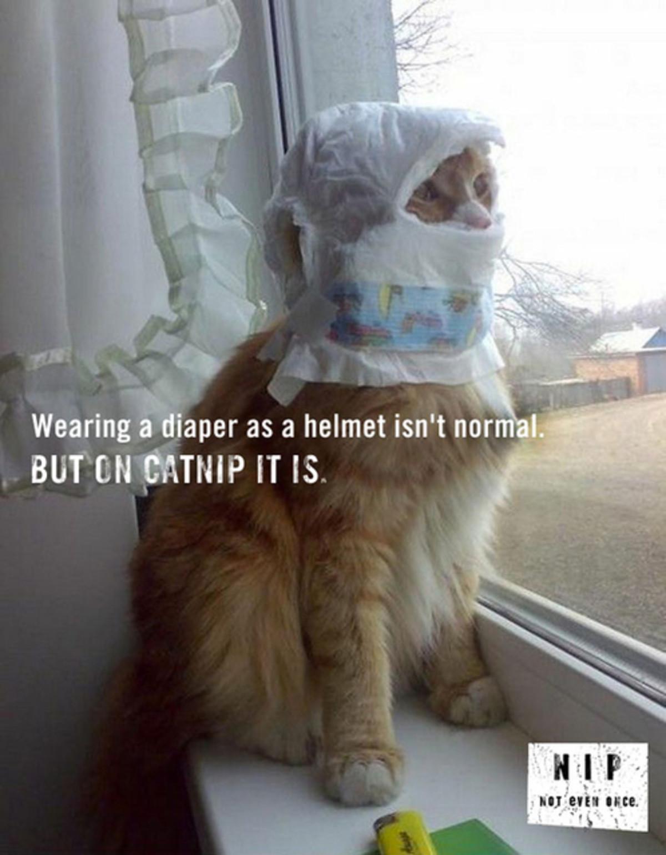 catnip. . f CH if IS catnip f CH if IS