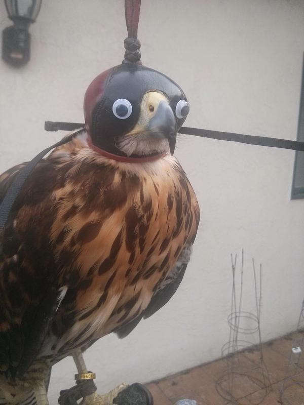 Crazy looking Eagle. . eagle Head cover