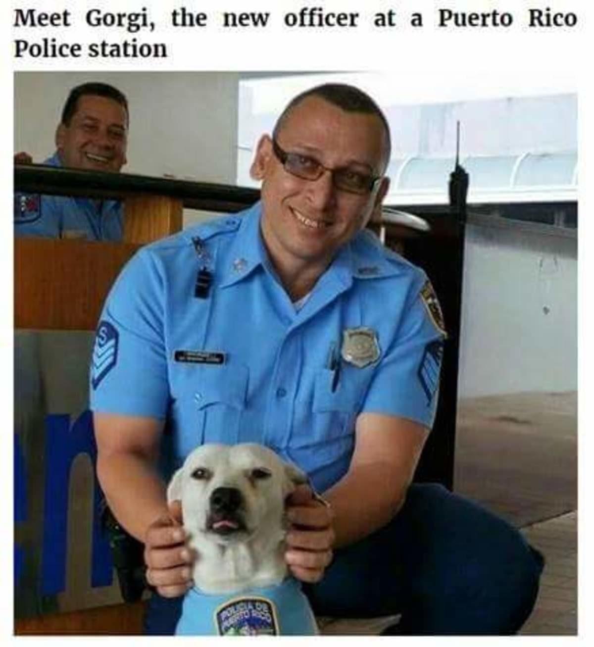 Gorgi. .. >having everything he needs... >lives in Peurto Rico. doggo Dog Cute