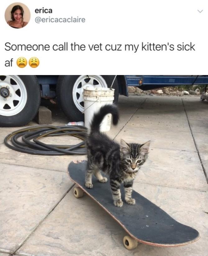 Kitten. . erica Someone call the vet on my kittens sick at virii' iip Kitten erica Someone call the vet on my kittens sick at virii' iip