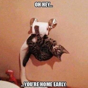 Kitties be crazy. . kitties Crazy bathroom bat cat homewrecker Stripey upside down youre home early cat meme