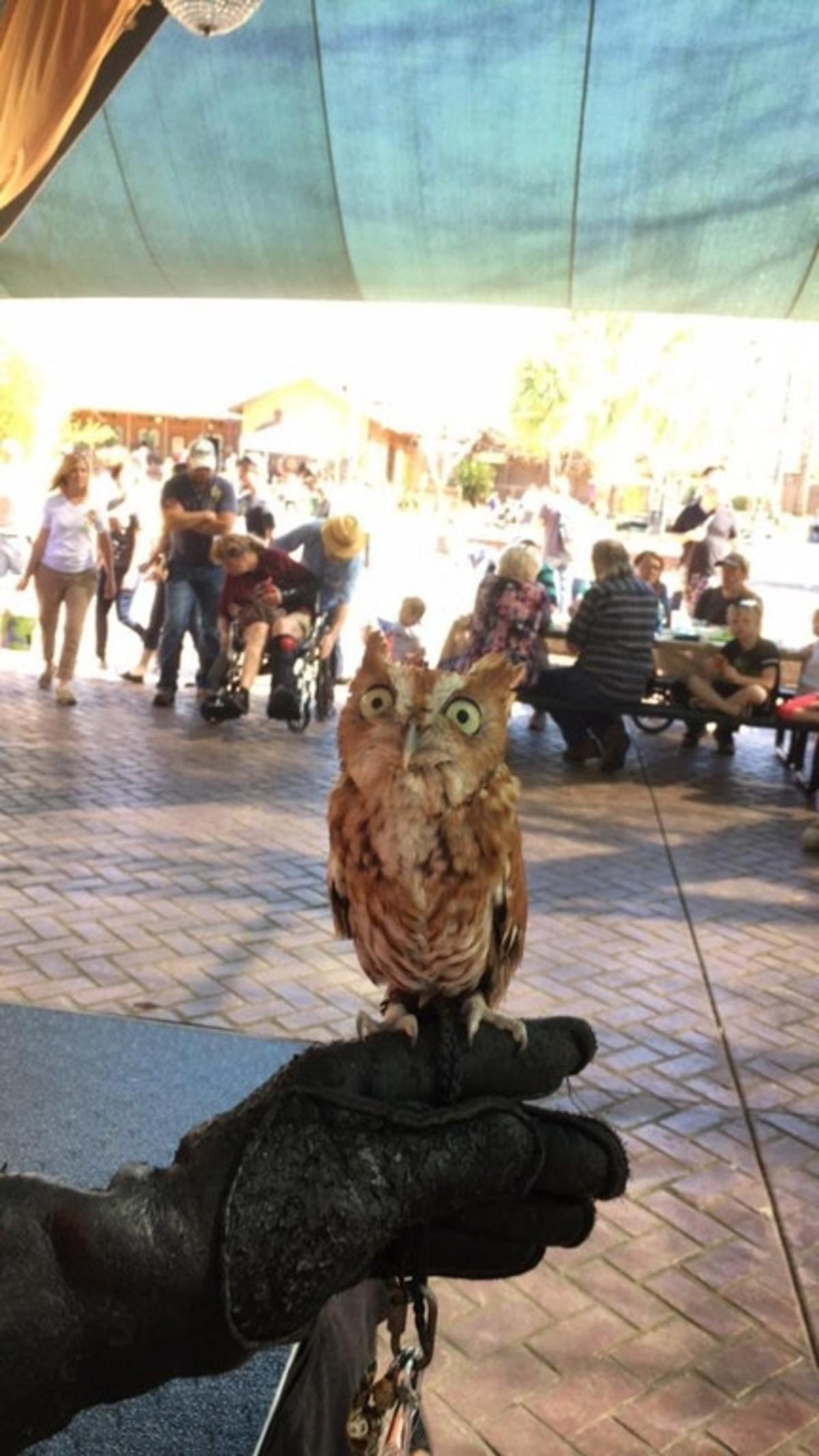 owl. .. explain this owl explain this