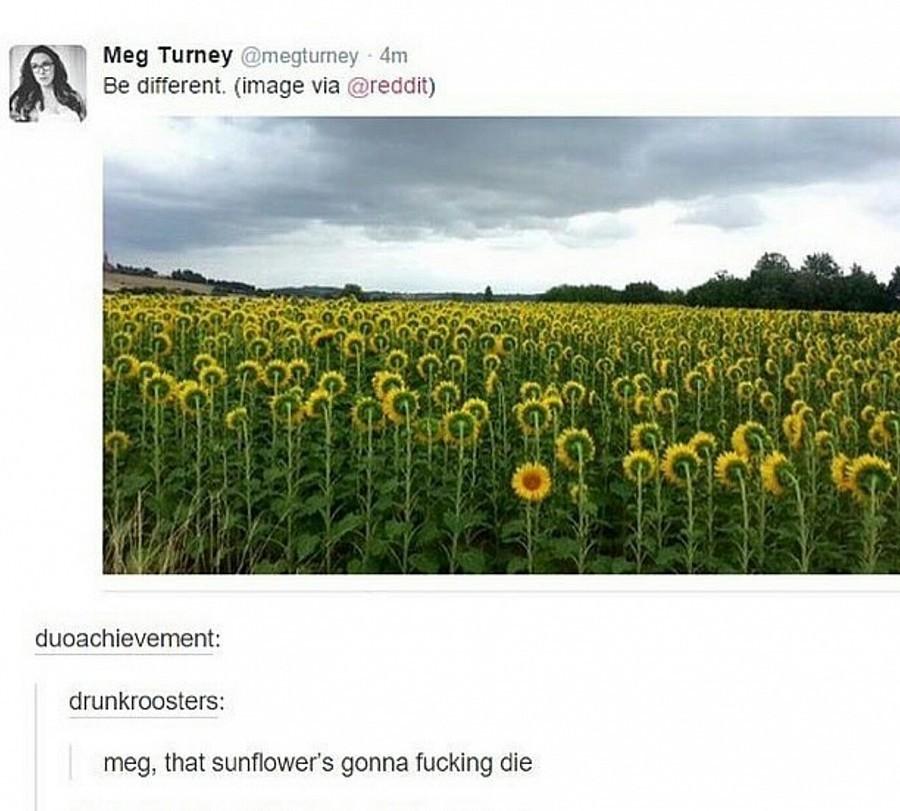 shut up Meg. . meg, that Sunflowers gonna fucking die shut up Meg meg that Sunflowers gonna fucking die