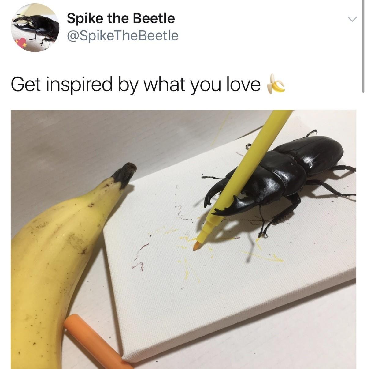Spike the Beetle. . hee, J Spike the Beetle 'NP'. Rhinoceros beetle > Stag beetle Fite me Spike the Beetle hee J 'NP' Rhinoceros beetle > Stag Fite me