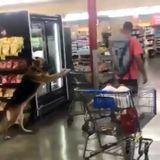 doggies in supermarket