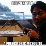 Prehistoric Mosquito