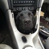My dogbox transmission is shifting ruff
