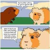 fluffy hate thread