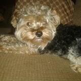 My dog Robby